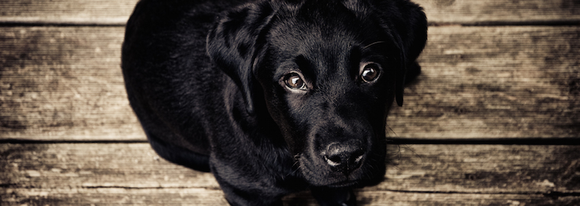 animal-dog-eyes-1137